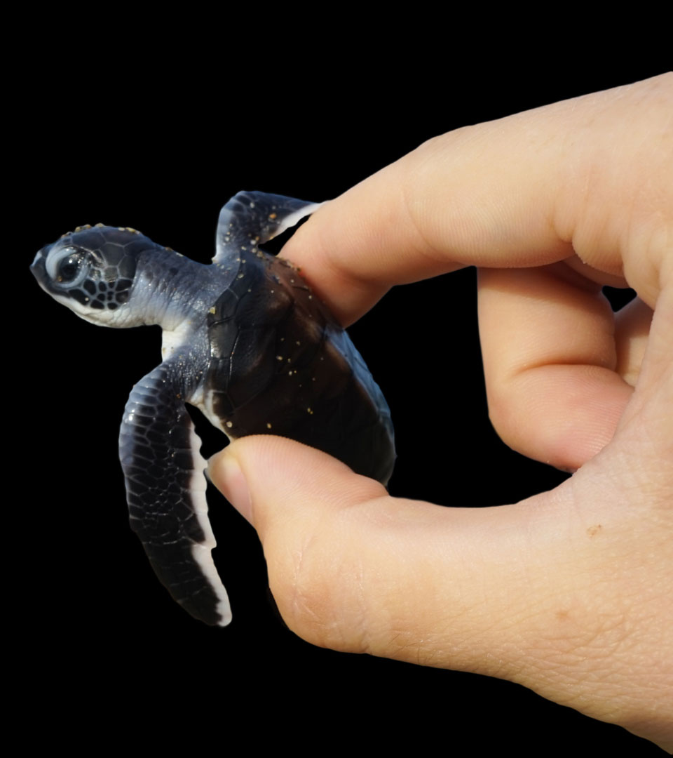 Energy efficient & turtle-friendly lighting that saves baby sea turtles